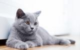 Bachblütenmischung Nr. 110 Aggressive Katze